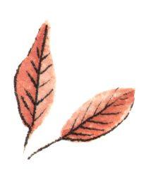Abstrusa_Leafes schabel-auf
