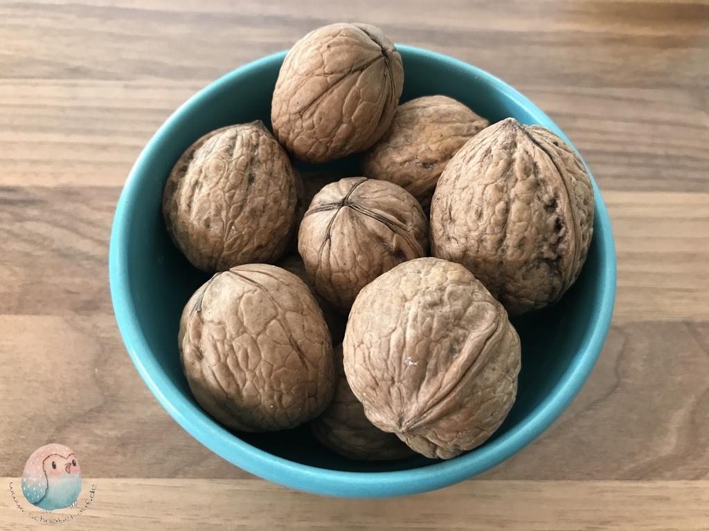 Walnüsse Nüsse für Kinder brainfood Walnuß schnabel-auf.de