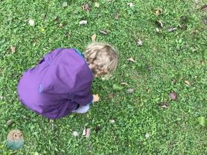 Kiese Kräuter sammeln schnabel-auf.de