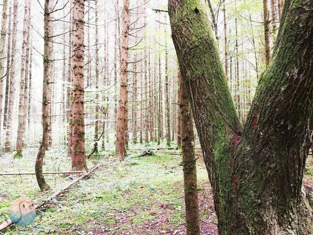 Waldspaziergang schnabel-auf.de (Kopie)