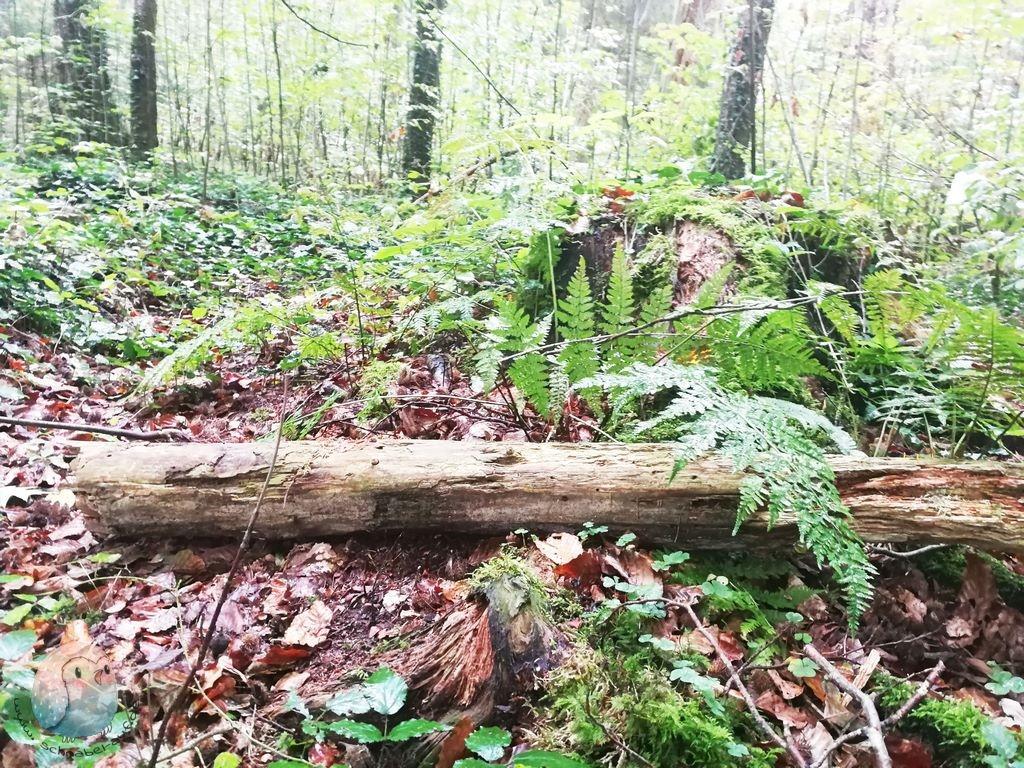 Waldspaziergang schnabel-auf.de