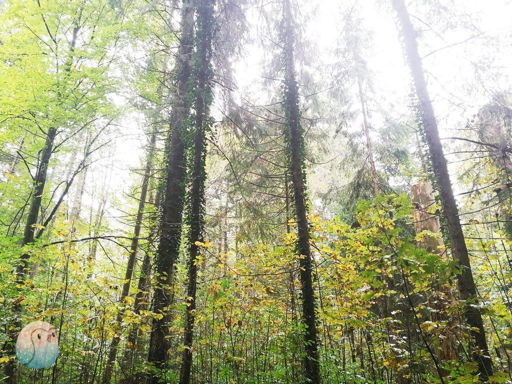Waldspaziergang schnabel-auf.de 5