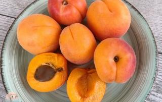 Aprikosen für Kinder schnabel-auf.de