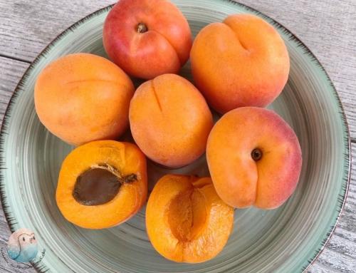 Aprikosen für Kinder