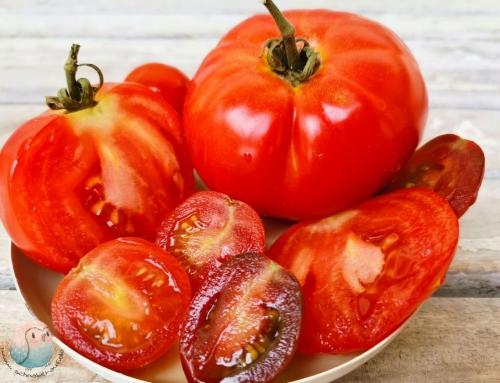 Tomaten für Kinder